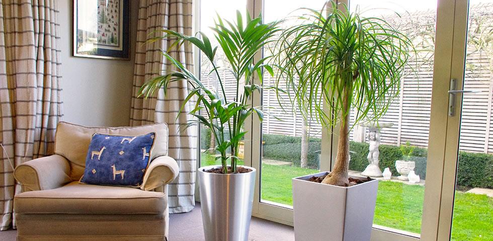 Jakes jungle indoor plant hire - Enhancing work efficiency home indoor plants ...